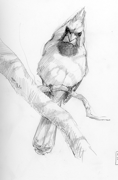 394x600 5 Steps To Better Bird Drawing Drawing The Motmot