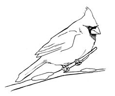 236x197 Learn How To Draw A Northern Cardinal (Birds) Step By Step