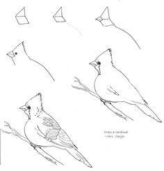 236x245 Northern Cardinal (Drawing) Northern Cardinal And Cardinals
