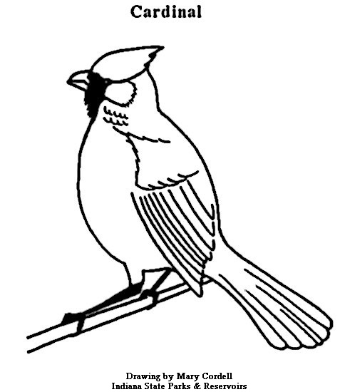477x550 Northern Cardinal Coloring Book Az Cardinals Coloring Pages