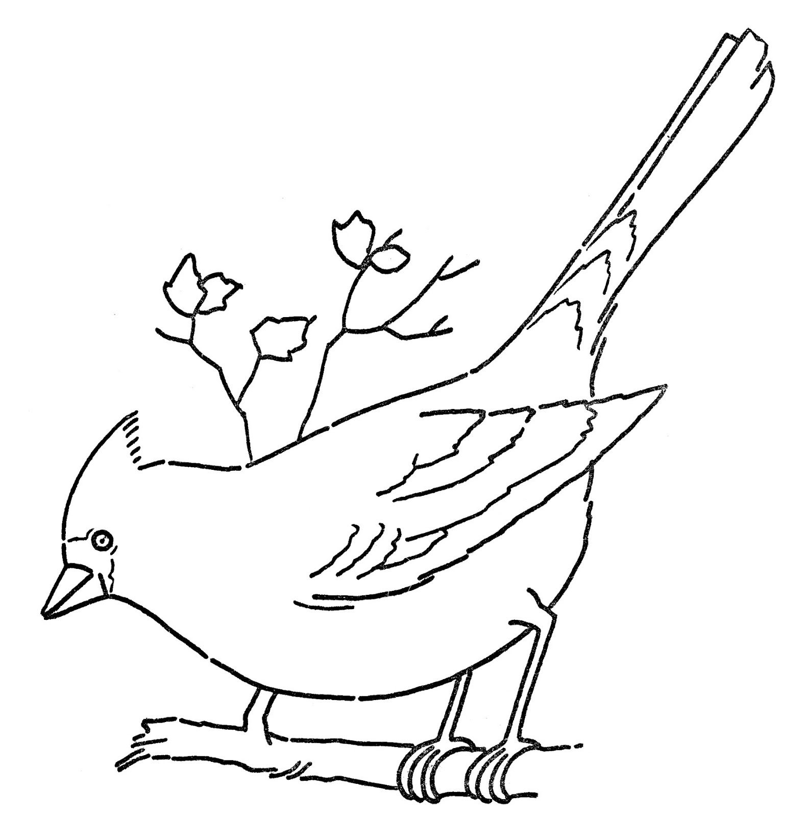1579x1600 Northern Cardinal Coloring Pages Free Page