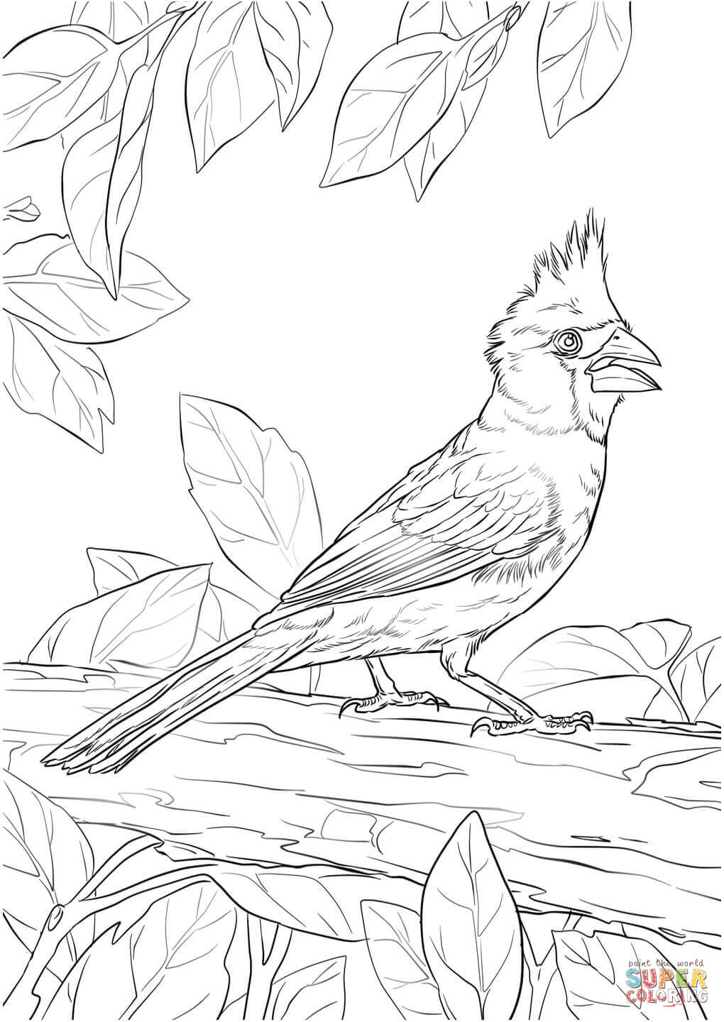 1020x1440 Northern Cardinal Coloring Page Free Printable Coloring Pages