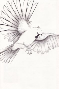 236x355 Two Red Cardinals Coloring Page From Northern Cardinal Category