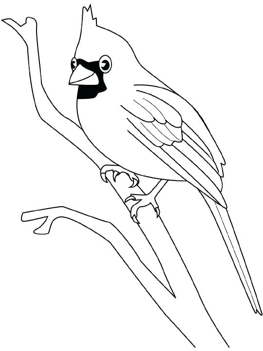 540x720 Cardinal Coloring Pages Synthesis.site