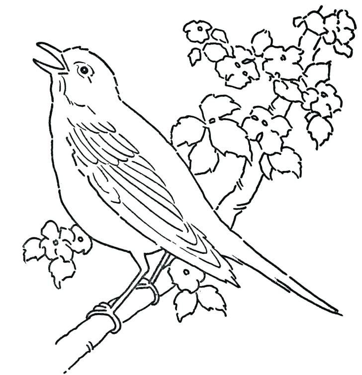 728x755 Coloring Pages Birds