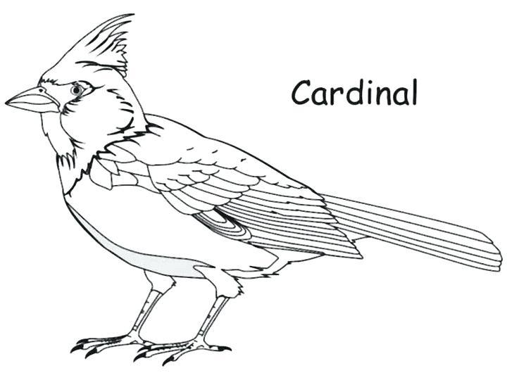 Northern Cardinal Drawing at GetDrawings
