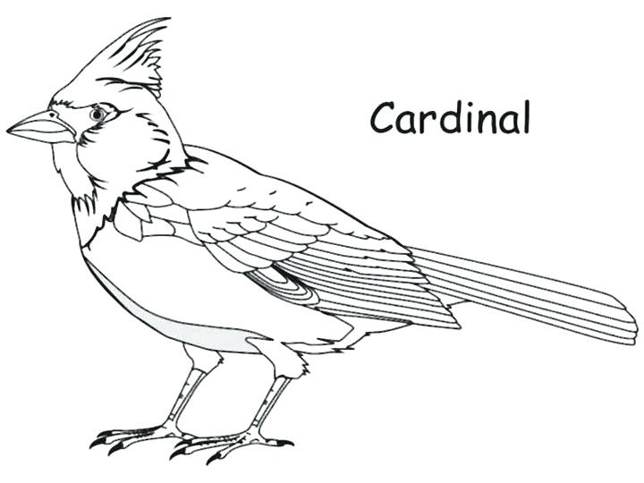 Northern Cardinal Drawing at GetDrawings   Free download