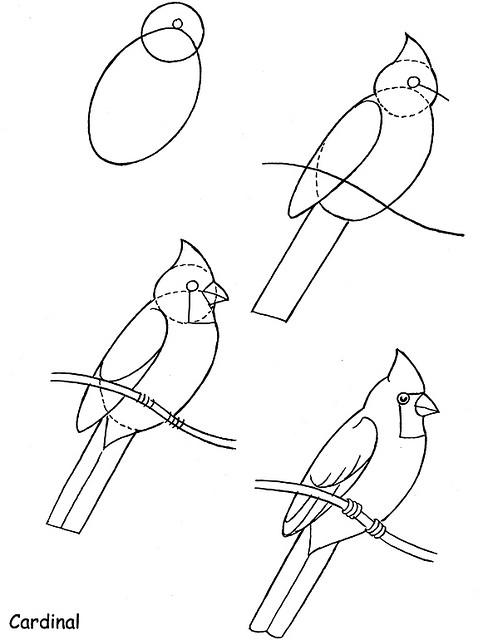 483x640 Best Photos Of Cardinal Bird Drawings