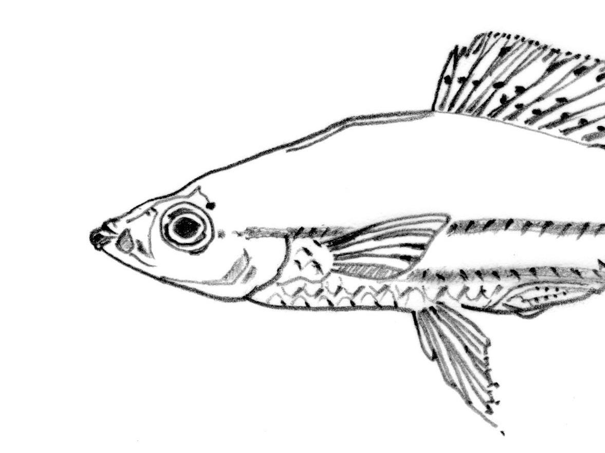 1177x883 Fish