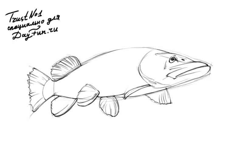 750x500 How To Draw Pike Fish Step By Step