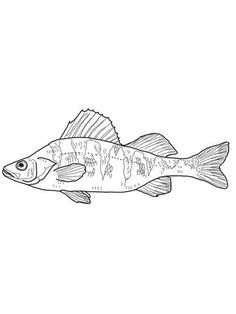 236x314 Smallmouth Bass.png Embroidery Embroidery