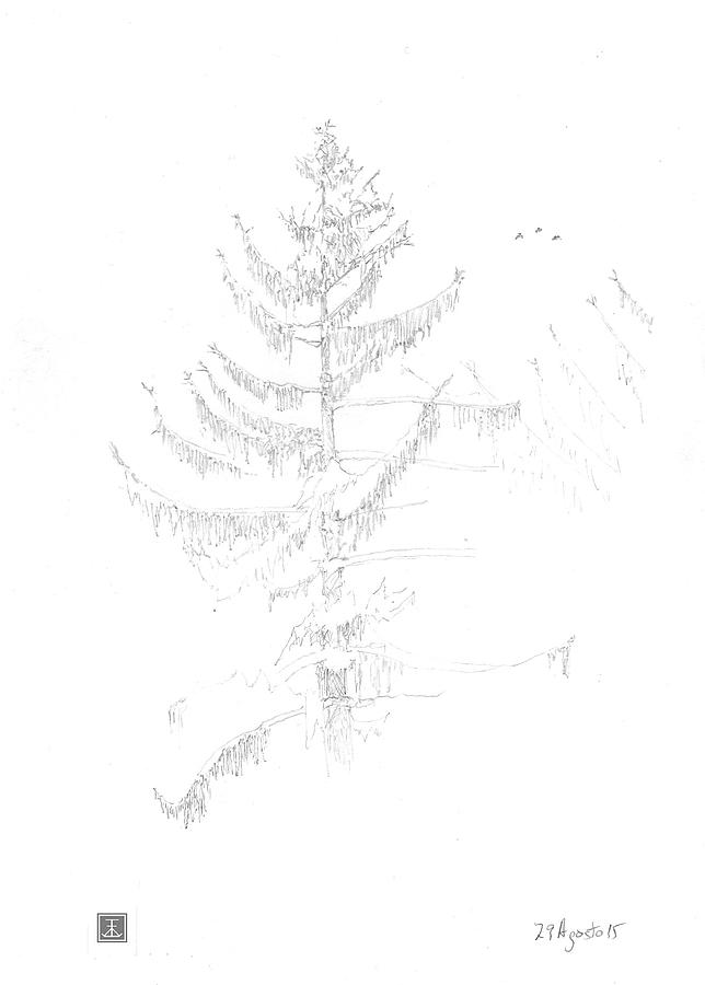 644x900 Norway Spruce With Birds Drawing By Tim Walsh
