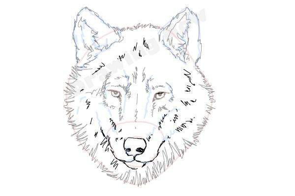 600x400 How To Draw A Wolf Face