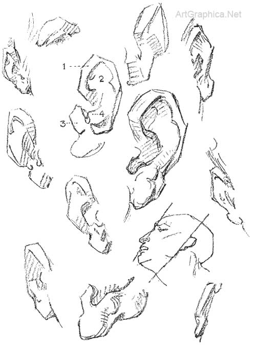 500x686 Constructive Anatomy George Bridgman, drawing eyes, ears mouth and