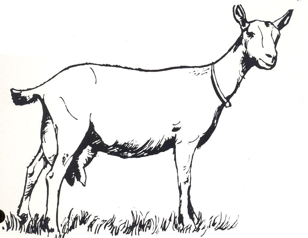 1063x823 Goat Clip Art
