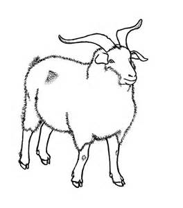 264x300 Nubian Goat Kid By Tha Baist On , Goat Line Drawing