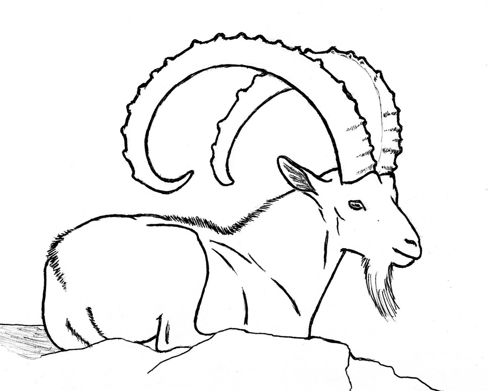 999x800 Other Goat Drawings