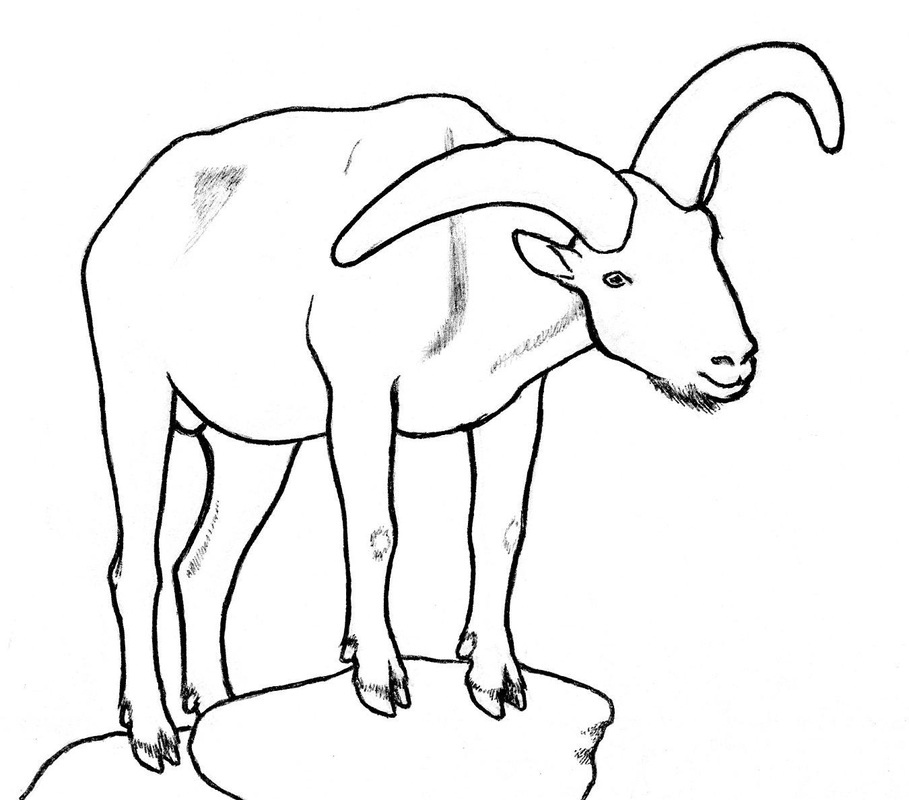 909x800 Other Goat Drawings