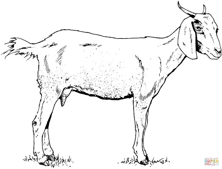 735x561 49 Best Goats In Art Images On Goat Art, Goats