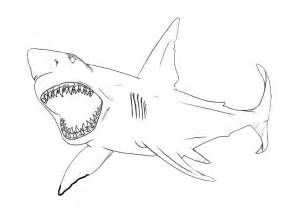 Nurse Shark Drawing