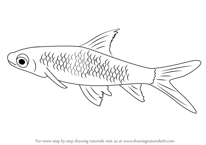 800x566 Learn How To Draw A Silver Shark (Sharks) Step By Step Drawing