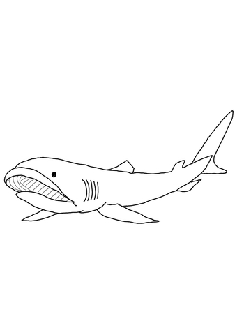 360x480 Megamouth Shark Coloring Page Free Printable Coloring Pages