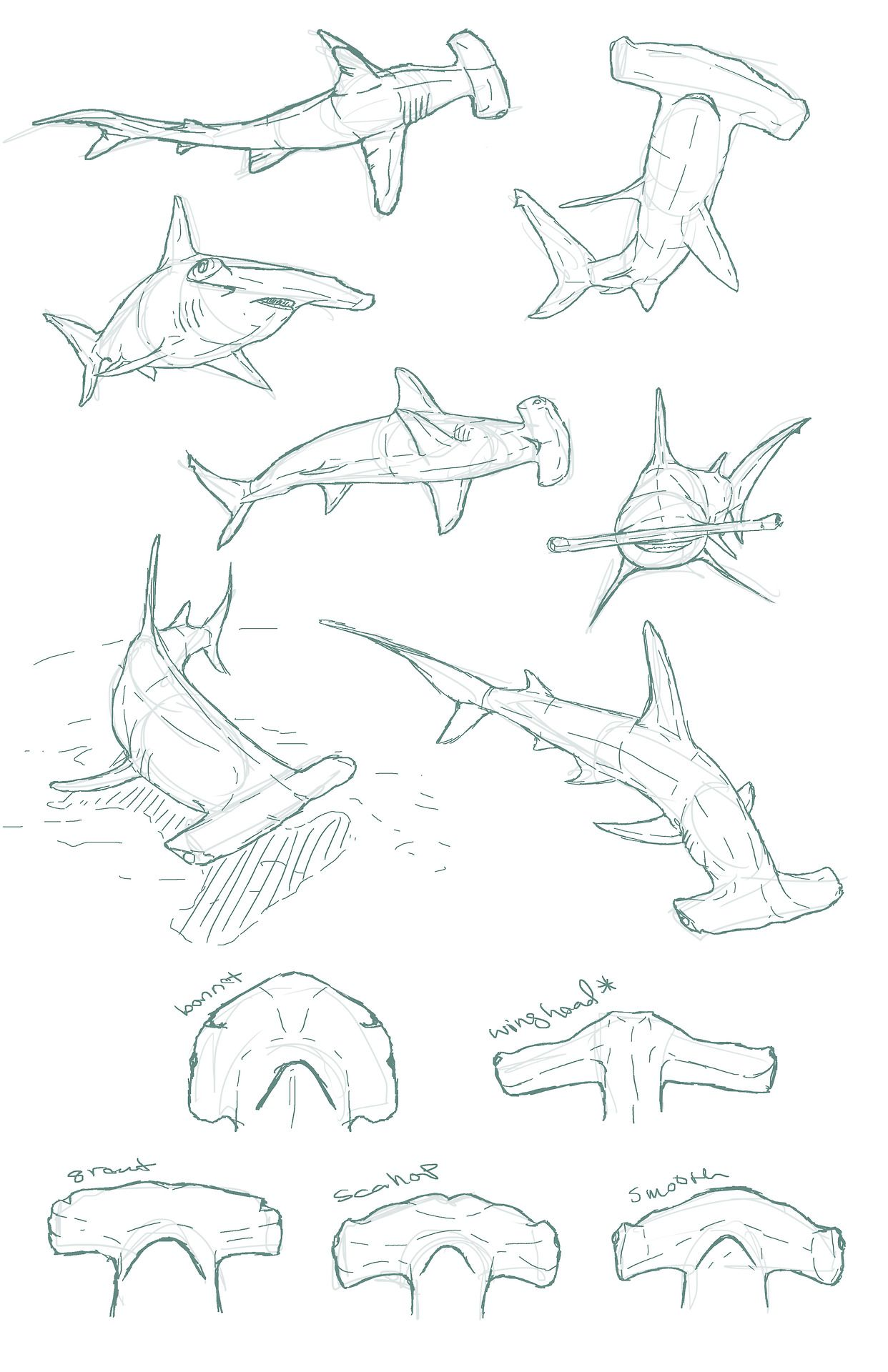 1242x1920 Edemoss Hammerhead Sketches I Did For A Piece Shark