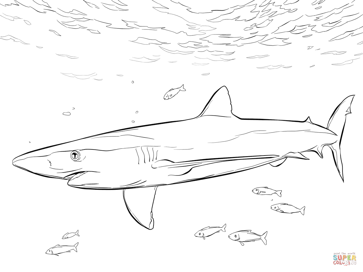 1199x899 blue shark with pilot fishes coloring page from blue sharks
