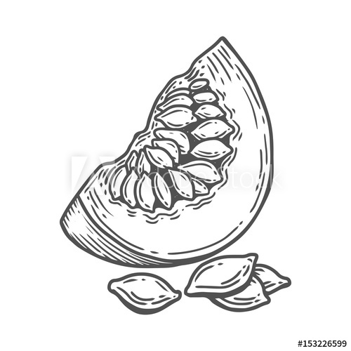 500x500 Pumpkin Seed Frui, Berry. Hand Drawn Engraved Vector Sketch Etch