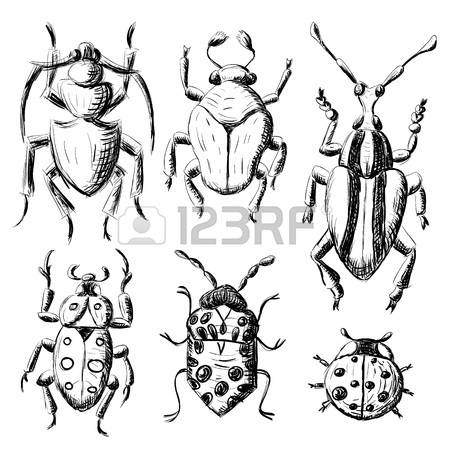 450x450 Hand Drawn Sketch Beetles Set (4 Of 4). Art Collection Insects