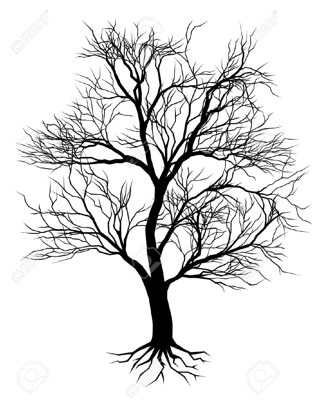 1050x1300 Old Oak Tree Drawing Oak Tree Silhouette Stock Photos Pictures