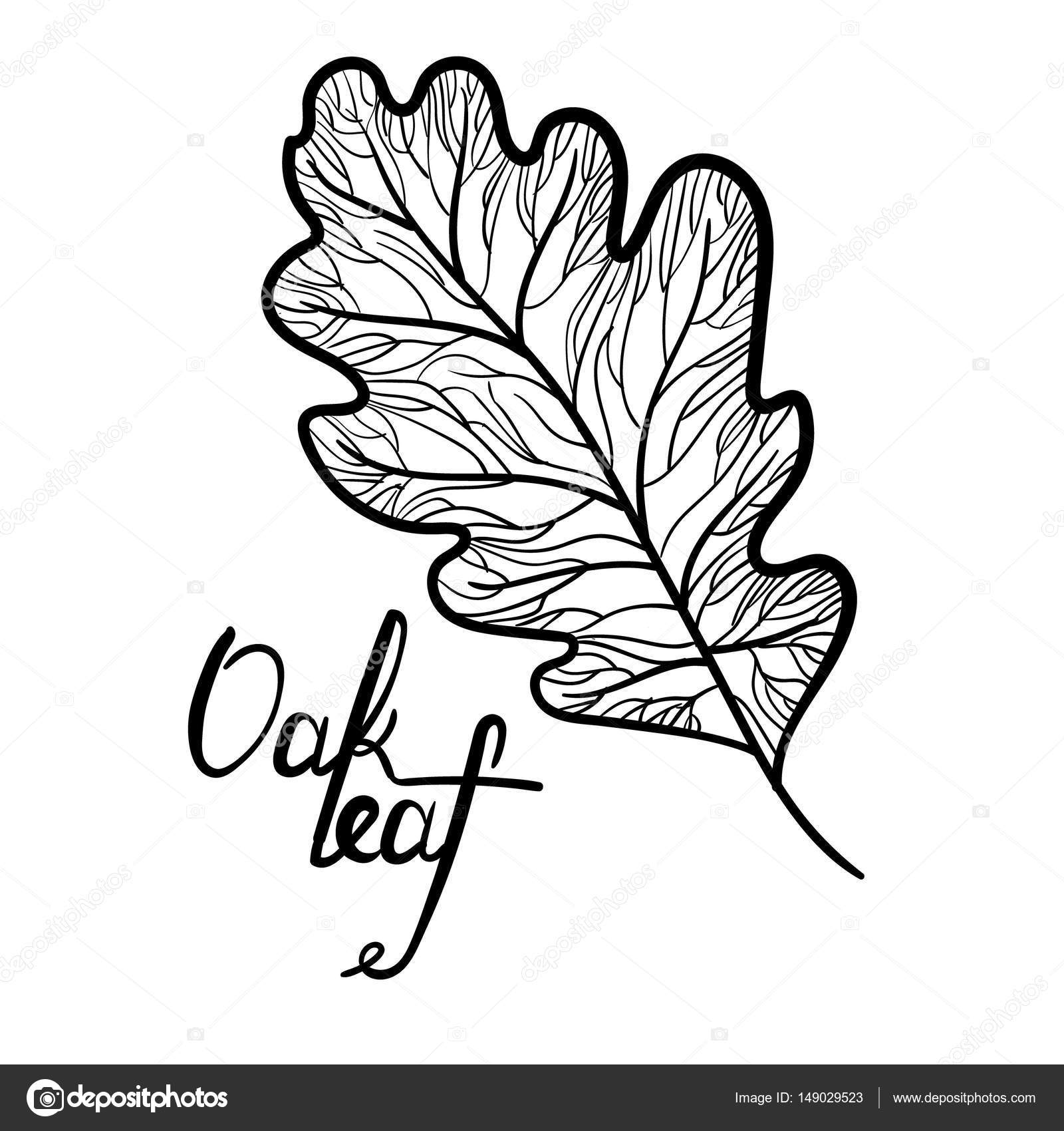 1600x1700 Hand Drawn Oak Leaf With Lettering Isolated Stock Vector