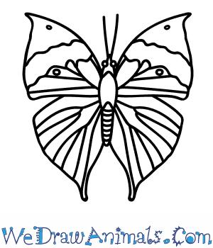 300x350 How To Draw An Orange Oakleaf Butterfly