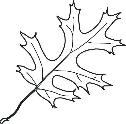 500x492 Oak Leaf Coloring Page Coloring Page Leaf Leaf Coloring Sheet