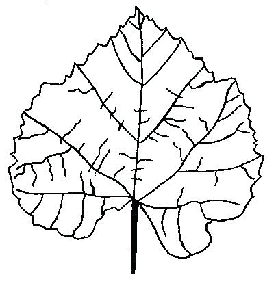 403x424 Oak Leaf Coloring Page Free Fall Leaf Coloring Pages For Family