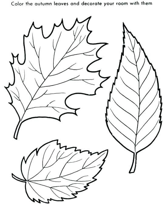 550x672 Oak Leaf Coloring Page Oak Leaf Coloring Page Leaves Coloring