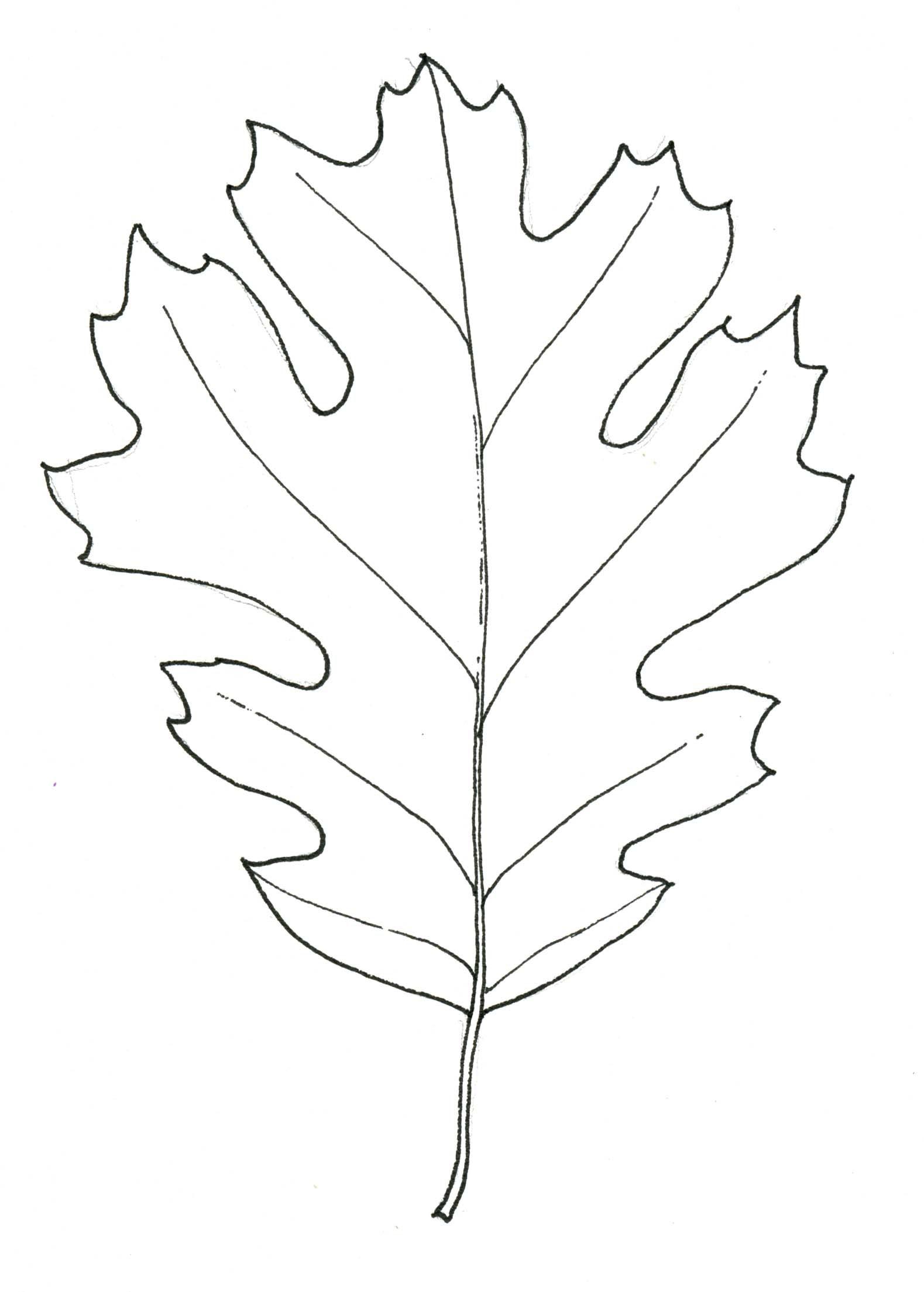 1579x2209 Black Oak Leaf Stippleboard 3