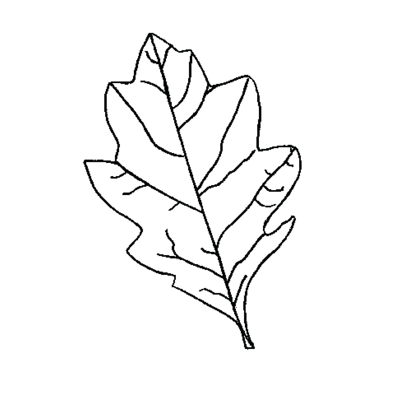 1600x1600 Leaf Template With Writing Lines Oak Leaf Template