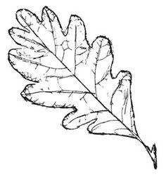 236x252 Doodled Leaves Clip Art Png Leaf Digital Stamp Printable