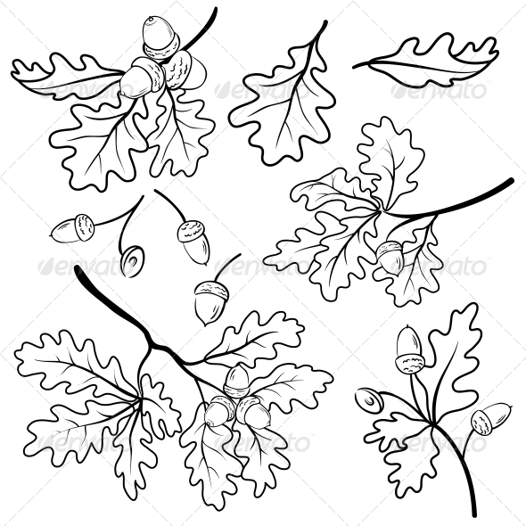 Oak Leaf Drawing Template