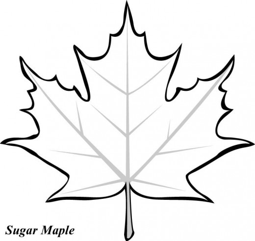 520x491 Leaf Printable Coloring Pages Clipart Panda