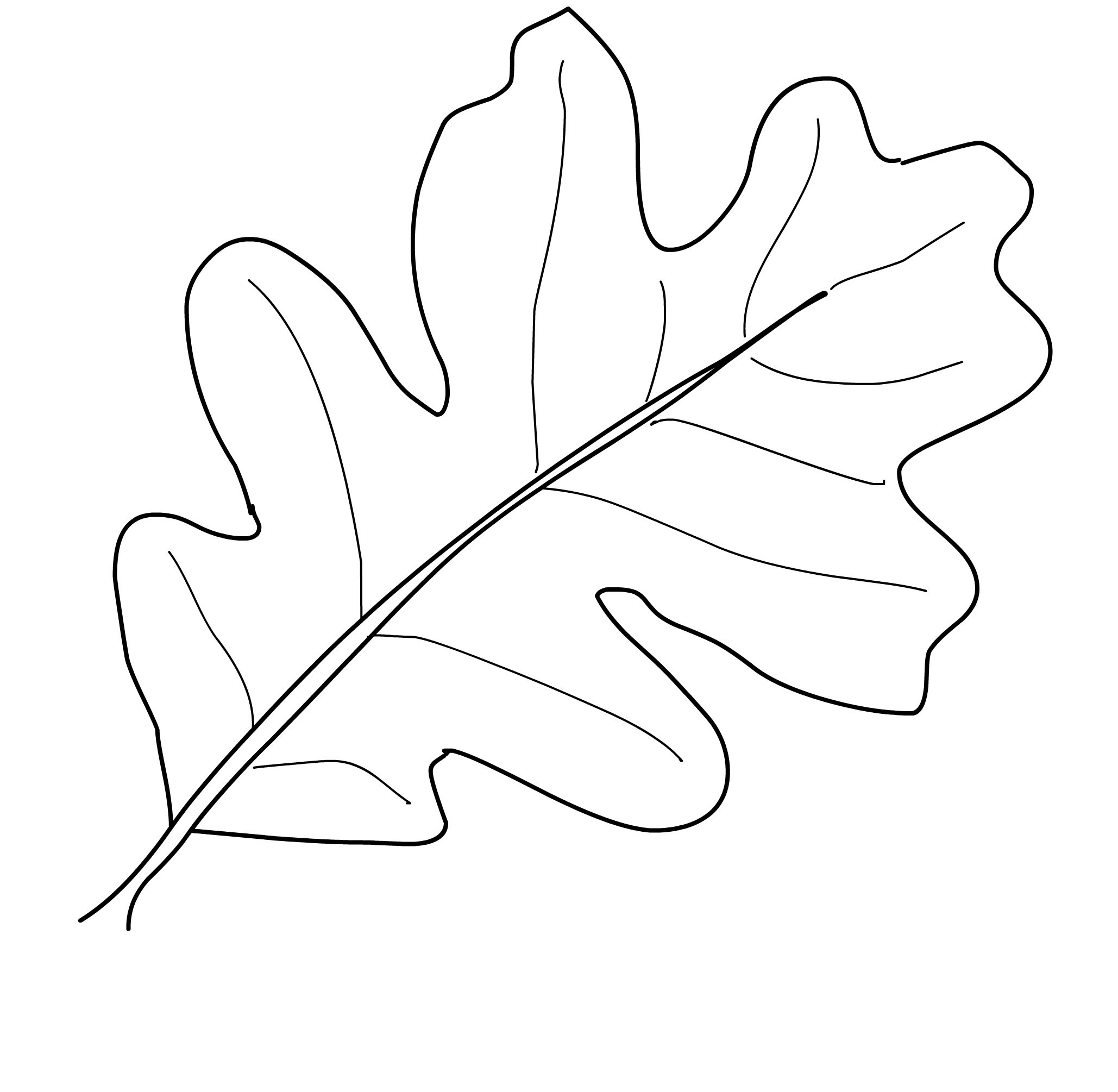 Oak leaf drawing template at getdrawings free for personal use 2058x2010 oak leaf nature coloring page for kids inspirational leaf template maxwellsz