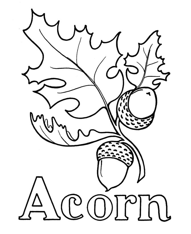 670x820 Oak Leaves And Acorns Drawing For Wood Burning
