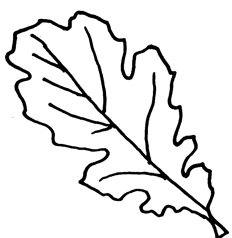 960x984 Coloring Book Picture Of Oak Leaves Leaf