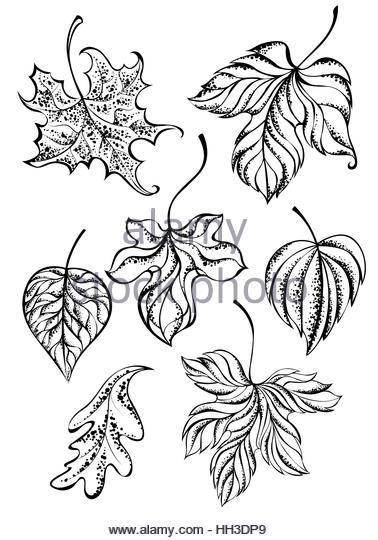 378x540 Oak Branch Leaves Hand Drawing Stock Photos Amp Oak Branch Leaves