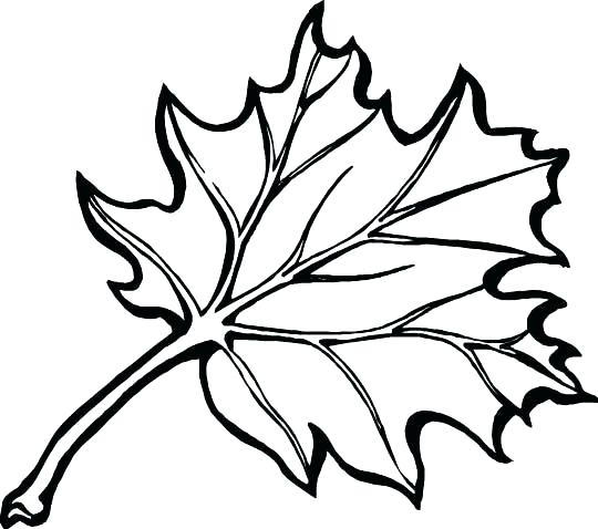 540x478 Oak Leaf Coloring Page Oak Leaf Coloring Page Share Oak Leaf