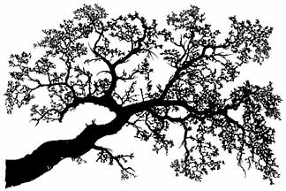 Oak Tree Branch Drawing