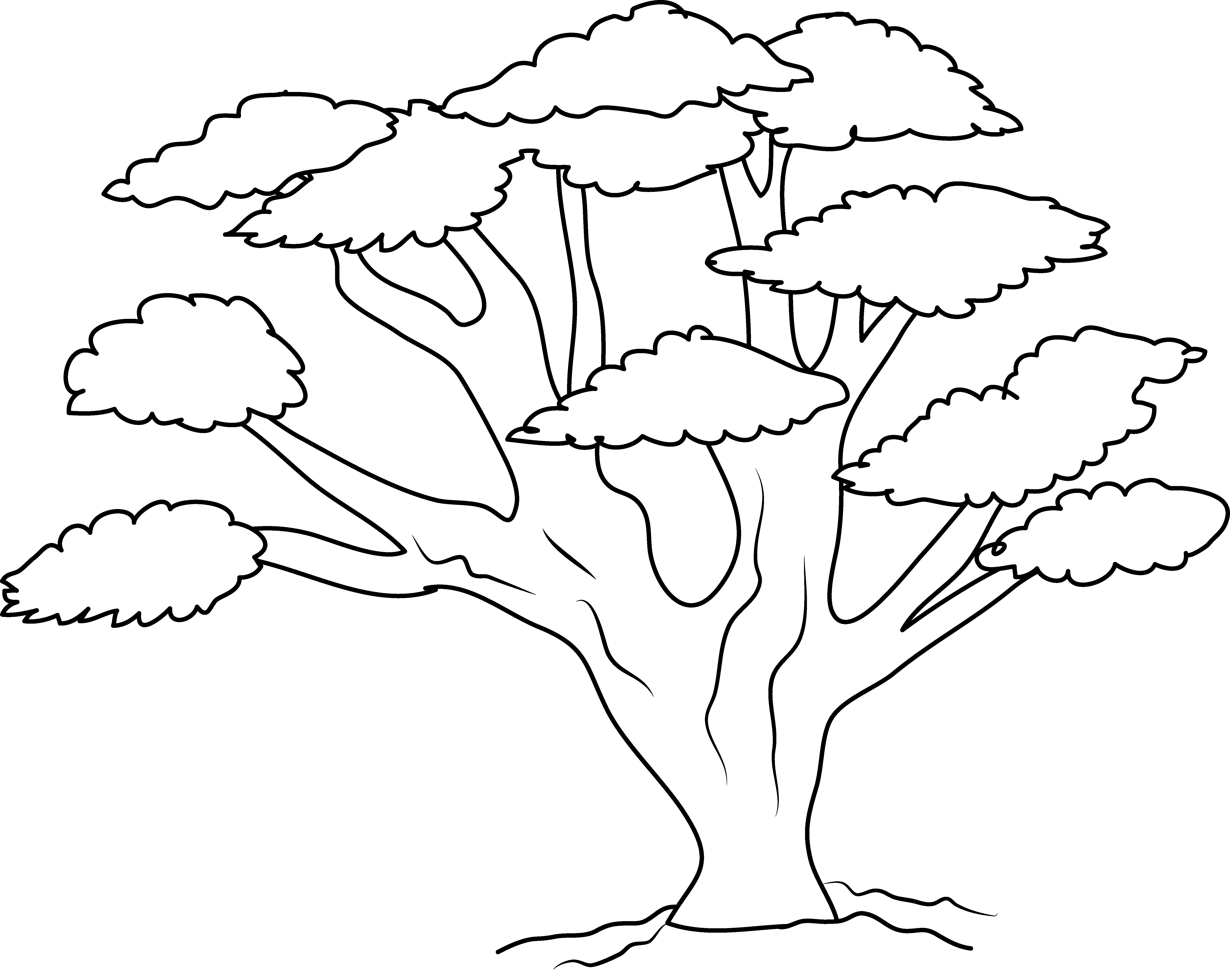 5870x4678 oak tree coloring page