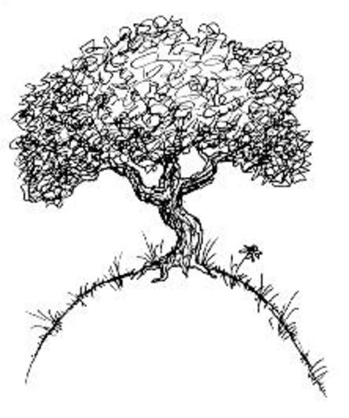 Oak Tree Branch Drawing At Getdrawings Com