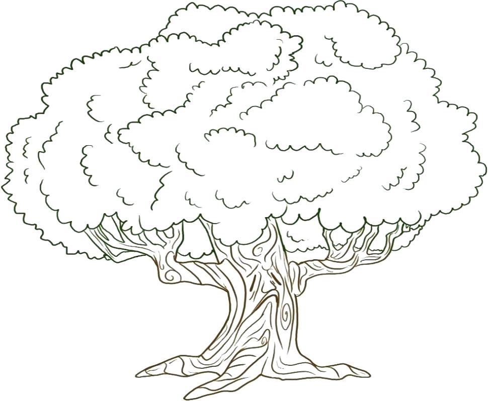 970x798 Coloring Pages Of Trees Awesome Drawing Oak Tree Page